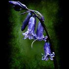 BlueBell by Maria Tzamtzi