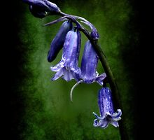BlueBell by Maria Tzamtzi
