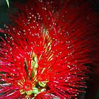 Bottle Brush Glow by Lozzar Flowers &amp; Art