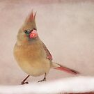 Mrs. Cardinal's Bad Hair Day ~ by Renee Blake