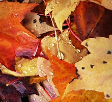 autumns colorful drops...two~ by Brandi Burdick