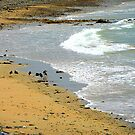 Birds On An Irish Beach by Fara