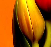 Glass Back-Splash-Interior deign series by Martin Dingli