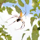 Golden Silk Orb Weaver by Dawne Dunton