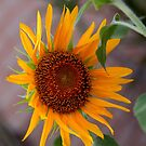 Giant Sunflower by TeAnne