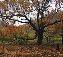 Fresh Growth after the Bushfire by myraj