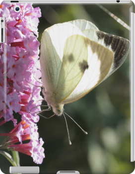 cabbage butterfly on pink syringa by Jicha