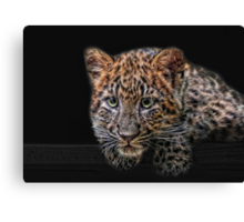 leopard kitten Canvas Print