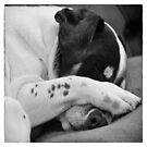 Jack Russell Terrier Dog Asleep in Cute Pose by Natalie Kinnear
