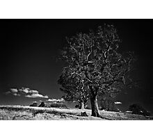 Majestic tree #3 Photographic Print