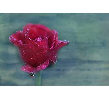 there is no such thing as an ordinary rose... Photographic Print