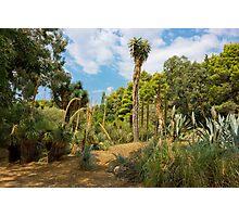 Cactus Plants Landscape Photographic Print