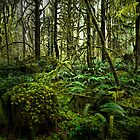 In The Deep Woods by Charles &amp; Patricia   Harkins ~ Picture Oregon