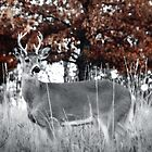 Young Buck by andrewjloftis