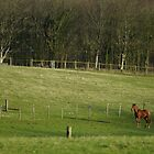 Chestnut Horse by glynk