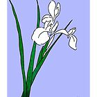 White iris by LizPoulain