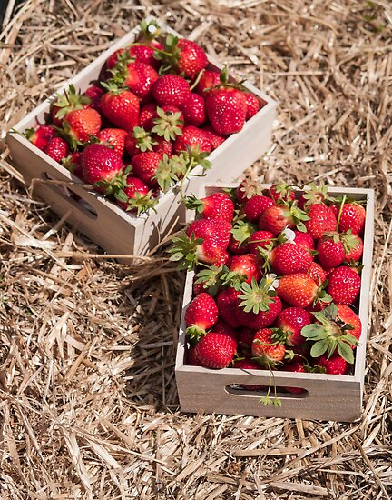 boxes of strawberries 2 by Anne Scantlebury