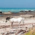 horses on the beach by Anne Scantlebury