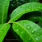 Leaves in the Rain  by lisaann1991