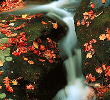 CASCADE,AUTUMN by Chuck Wickham