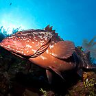 Along the Wall With Mr. Grouper by Todd Krebs