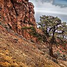 Tree and Cliff by homendn