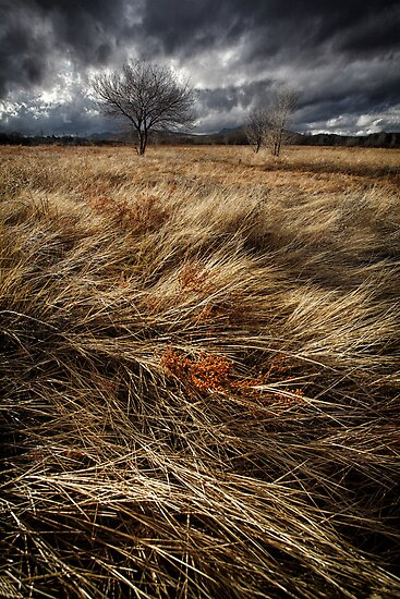 Bluster by Bob Larson
