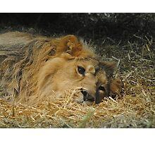 Sleepy Head. Photographic Print