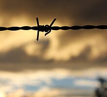Barbed Wire Sunset by Jennifer Heseltine