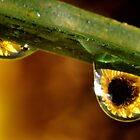 Dew Drops by Robin Lee