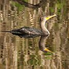 CORMORANT by TomBaumker