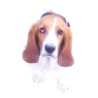 Bassett Hound  by Barfish88