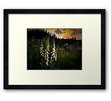 Foxgloves In The Light Framed Print