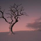Big Tree - Little Tree by Brian Kerr