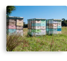 beehives 4 Canvas Print