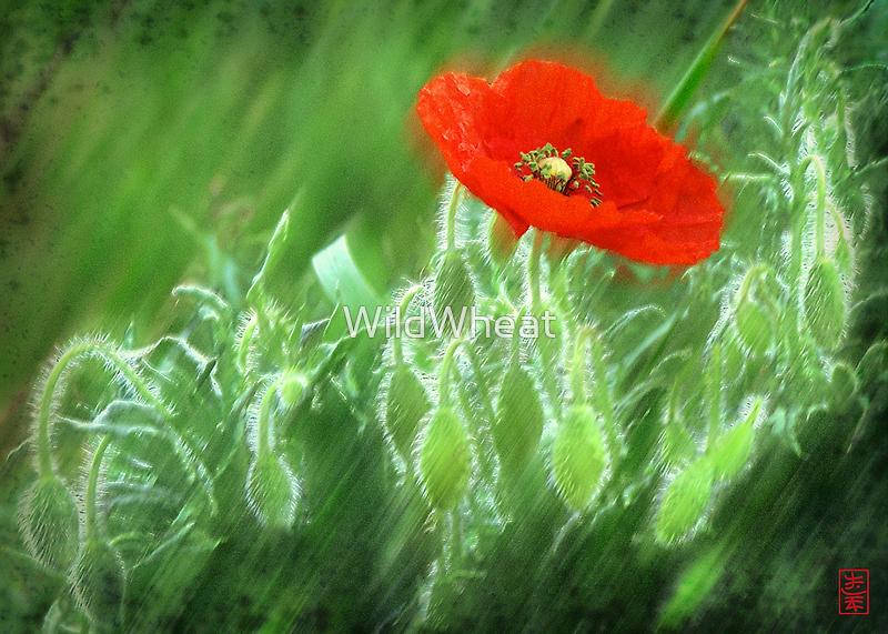 The Poppy Nursery by WildWheat
