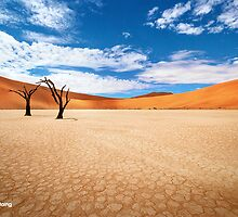 Dead Vlei - Limited Edition Fine Art Photograph by Jarrod Castaing