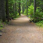 Mountain Path, Mt Rainier by Joel Brown