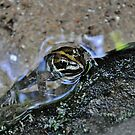 Froggy pond by Karen01