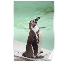 Happy penguin Poster