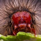 Hungry Red Caterpillar by kalleretsas