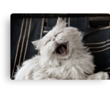 They say that NOTHING beats a good belly laugh!  Canvas Print