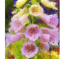 Cowbell Flowers - Cambria, CA Photographic Print