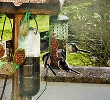 Sharing a feeder by missmoneypenny