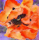 Oriental Poppy (red) (Original painting sold) by Jacki Stokes