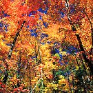 AUTUMN,RICH MOUNTAIN by Chuck Wickham