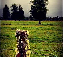 Countryside NZ by andreisky