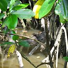 Spot the Croc by sarbi