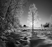 Frost by Daniel Gudmundsson