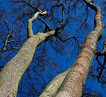 Reach For The sky by DavidHornchurch